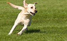 runningDog Birdneck Animal Hospital Virginia Beach.jpg