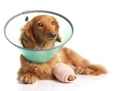 Veterinarian in Virginia Beach Provides Laser Surgery
