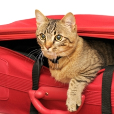 Virginia Beach veterinarian provides pet boarding