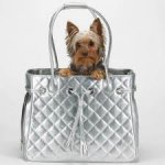 dog_in_purse_birdneck_animal_hospital_veterinarian_virginia_beach