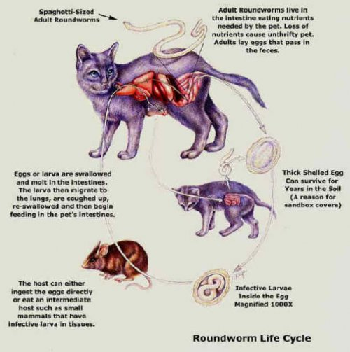 Cats Parasites And Your Family